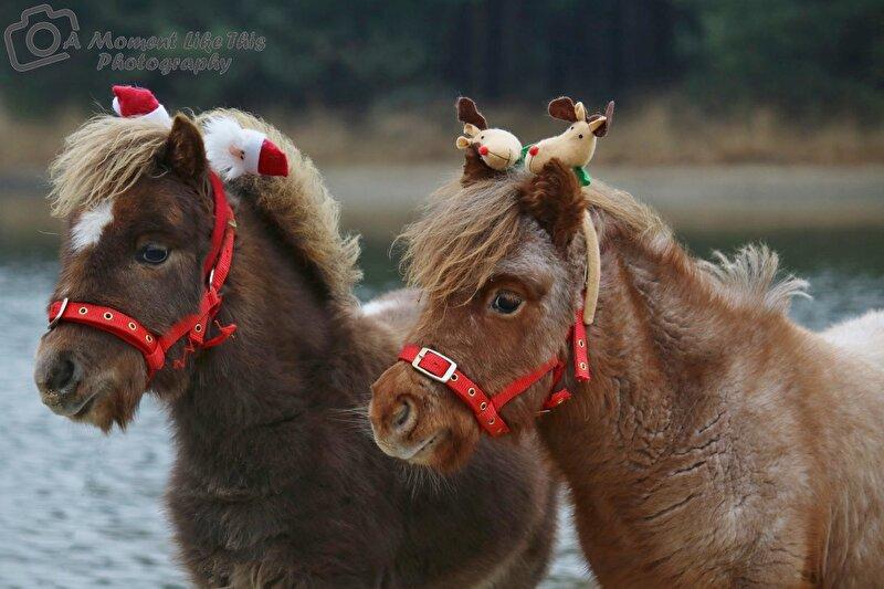 Ook Orange en Storm mochten op de kerst foto. • Bokt.nl