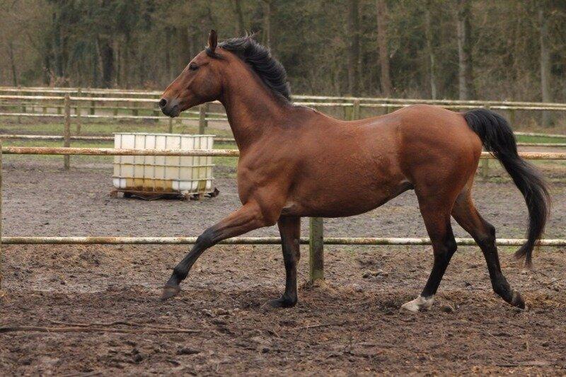 mager paard dikker krijgen