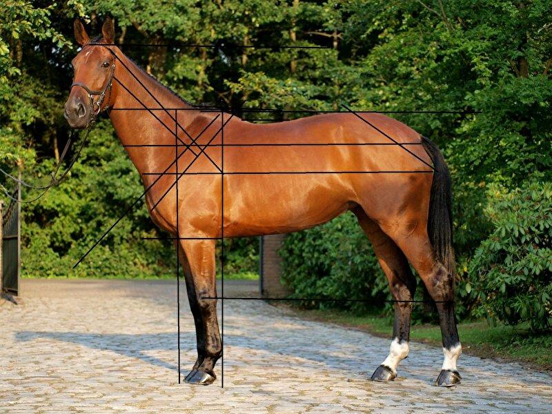 exterieur beoordelen bouw paard meningen