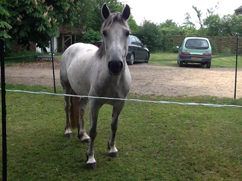 Hedendaags Ervaring connemara pony's. • Bokt.nl JE-97