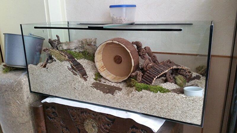 Syrische hamster in terrarium of toch gewoon traliekooi - Schilderij kooi d trap ...