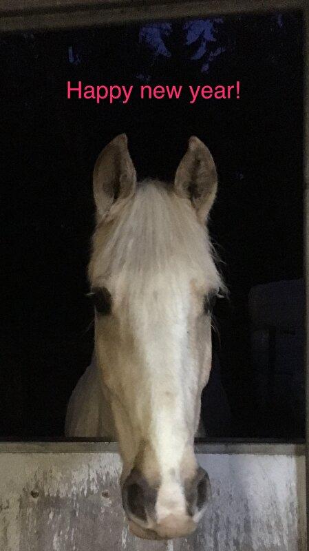 wat mogen paarden eten