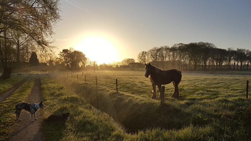 Het paarden aan huis tips topic deel 3 for Paard aan huis te koop