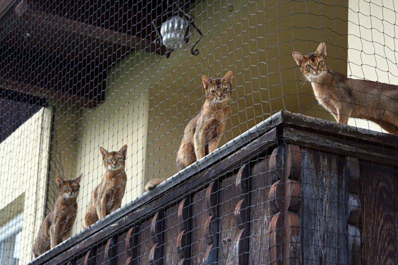 Tuin Afzetten Kat : Balkon katproof maken u bokt