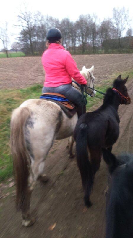 Het paarden aan huis tips topic deel 2 for Paard aan huis te koop