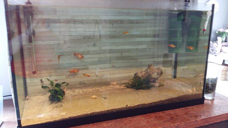 [HK] Show je aquarium II!  u2022 Bokt nl