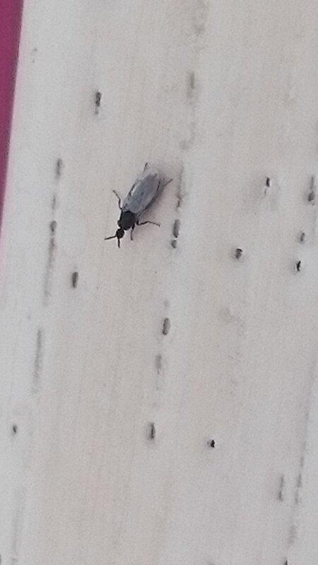 Hele Kleine Zwarte Beestjes In Huis