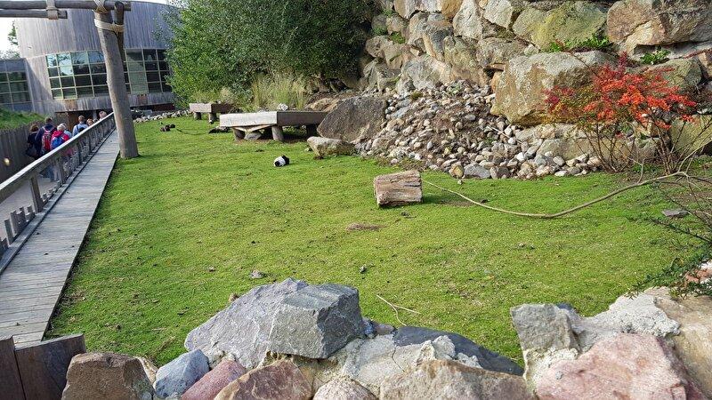 Cavia of andere kleine grazers in de tuin? u2022 bokt.nl