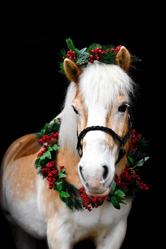 Kerst fotoshoot met Stanley • Bokt.nl
