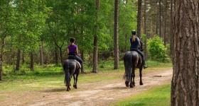 Een rit van 31km met Passoa op de Hoge Veluwe