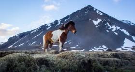 6 weken IJsland