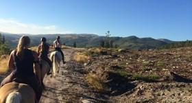 Mijn werkervaring in Portugal bij Horse&Move