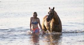 Puur genieten van zon zee strand & paardjes