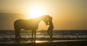 Mijn paarden-jaar so far!