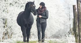 [Welsh Cob] Walking in a winter wonderland..
