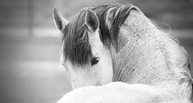 Resultaat paardenworkshop zoom.nl