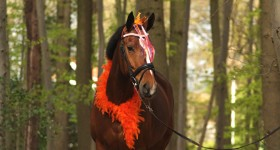 Koningsdag/Nederland thema fotoshoot!