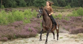 Native horse Andorra straalt