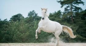 Paarden & jurken fotomeeting in Ommen