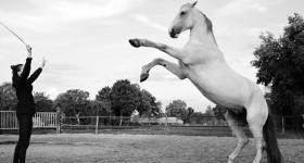 De andere kunstjes van een Lichte Tour paard