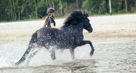 Flikka ~ Sand, sea & horse sweat are good for the soul!