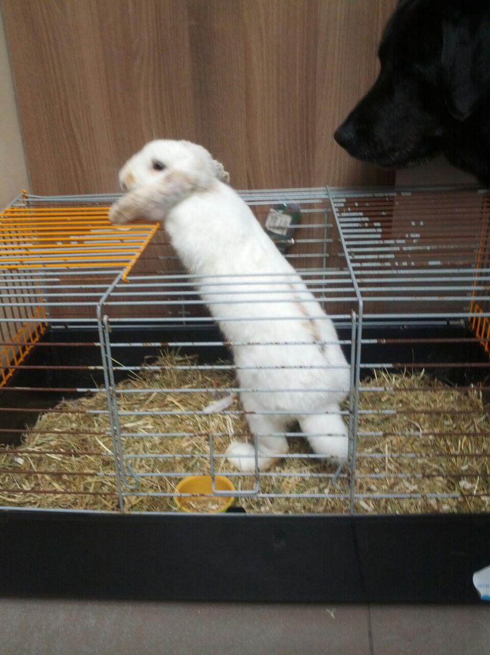 Gezocht een groot konijnen hok - Een hok ...