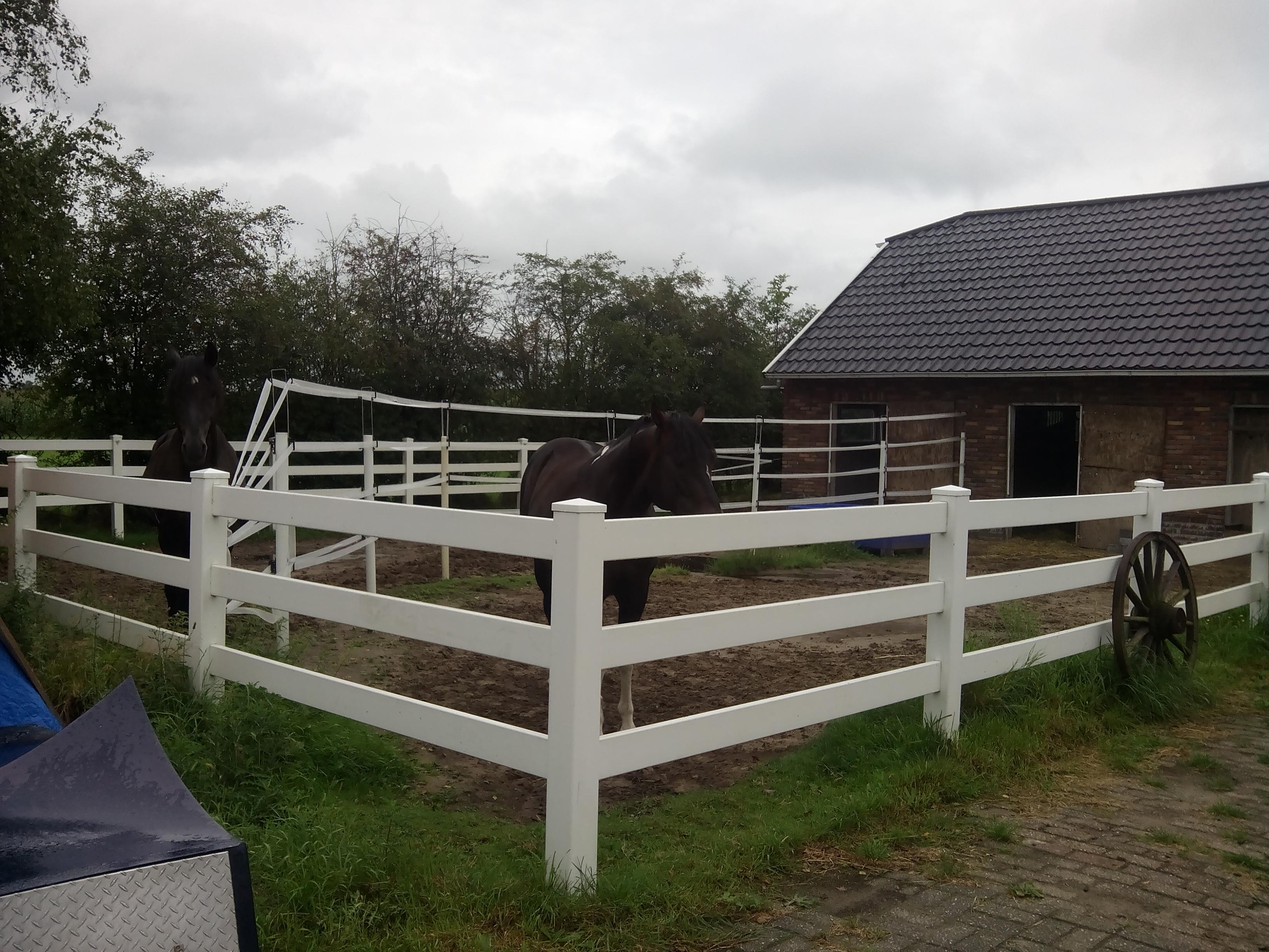 woning met paardenstallen rijbak weiland paddocks