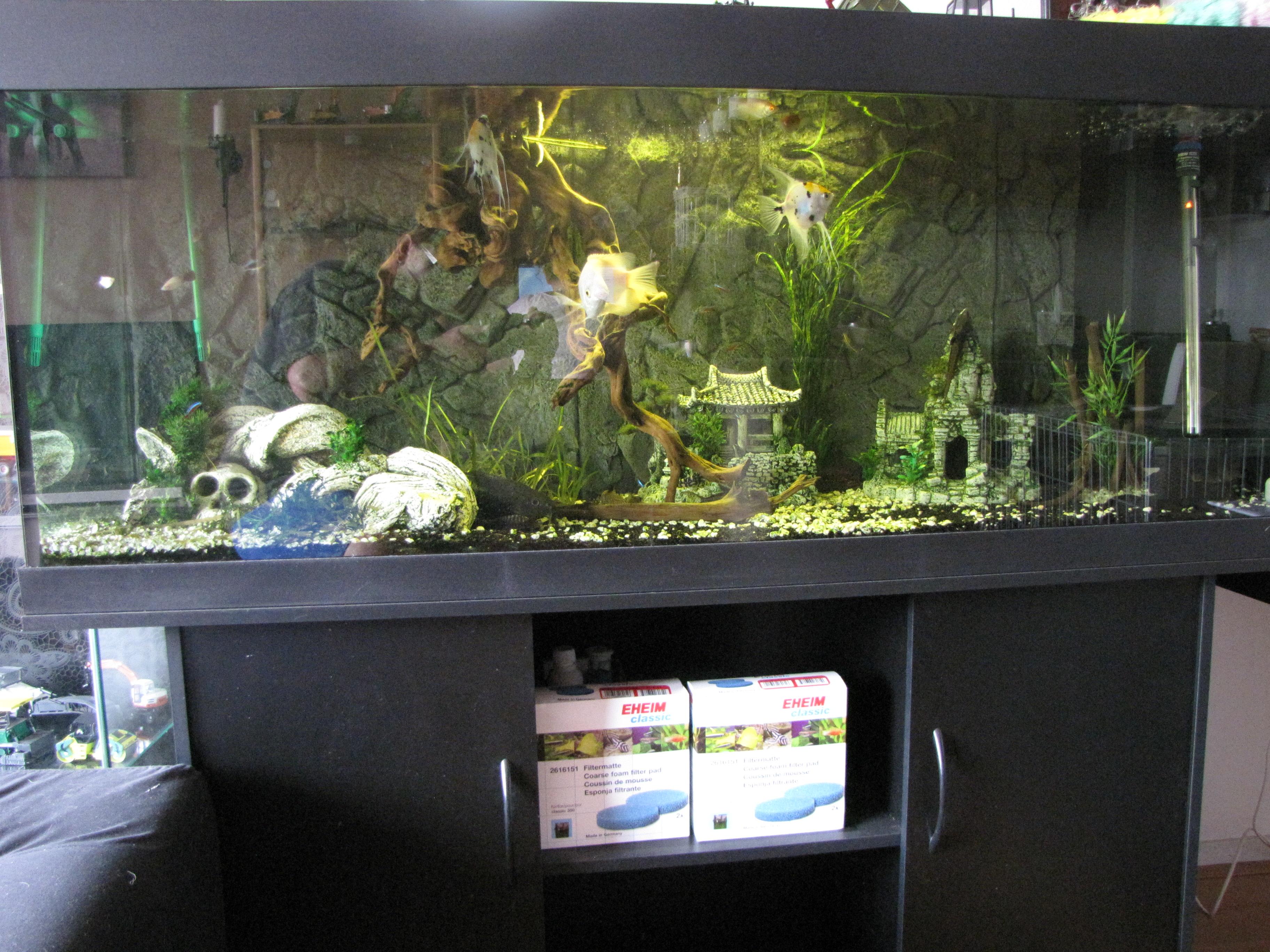 te koop super mooi aquarium   Bokt nl