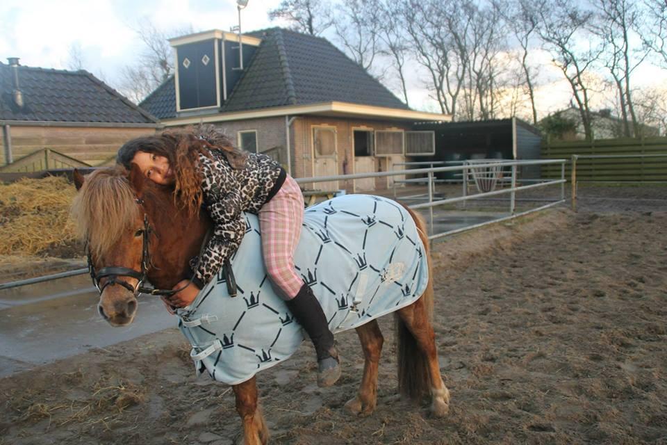 Bruikleen adoptie pony paard gezocht for Paard aan huis te koop