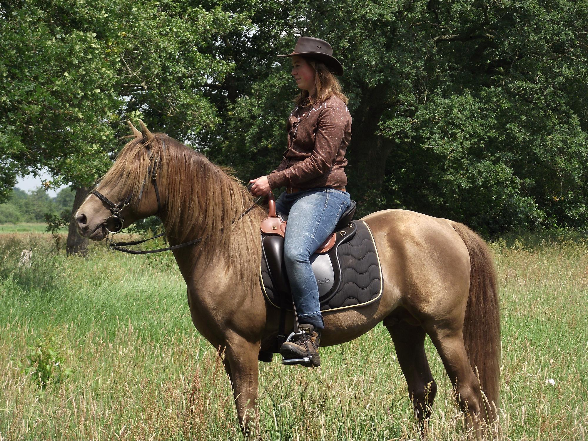 TER DEKKING: Rocky Mountain Horse 'Sam's Dusty Shadow' | Bokt.nl: www.bokt.nl/markt/ad/33223/ter-dekking-rocky-mountain-horse-sams...