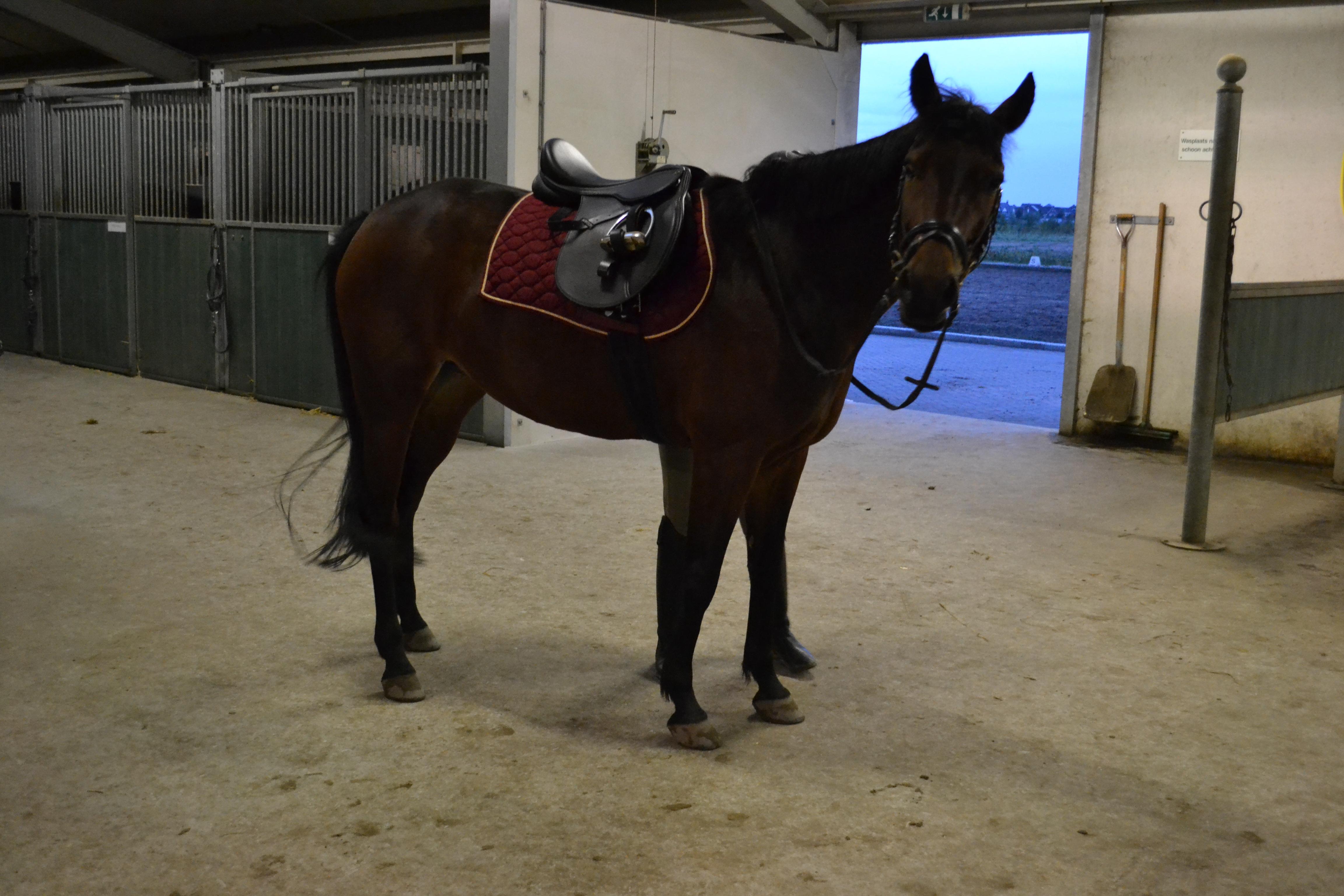 Grote e pony klein paard te koop 700 euro for Grote visvijver te koop
