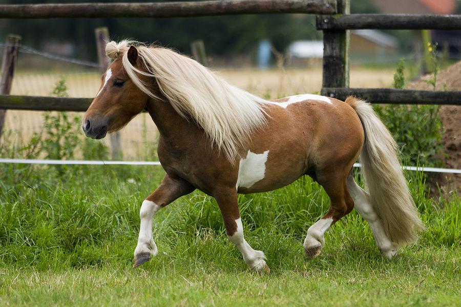 Welk Paardenras Past Bij Jou Uitkomsten Quizlet Nl