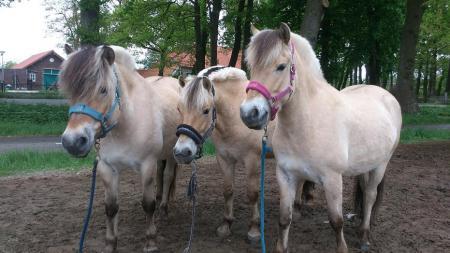 Fjorden Paarden Te Koop Bokt Nl