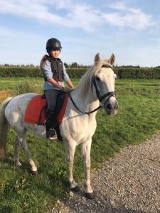 Wonderbaar Connemara pony te koop | Bokt.nl HH-19