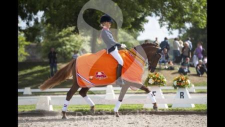 Dressuurles aan huis voor pony en paard omg drachten for Paard aan huis te koop