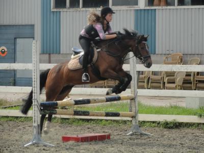 Betere Te koop aangeboden: super brave Connemara-pony | Bokt.nl MI-05