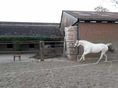 Ongebruikt Lieve recreatie d pony te koop / Connemara/ | Bokt.nl MQ-39