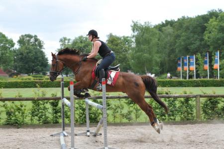 Te Koop Geweldig Paard Voor Ervaren Ruiter Bokt Nl