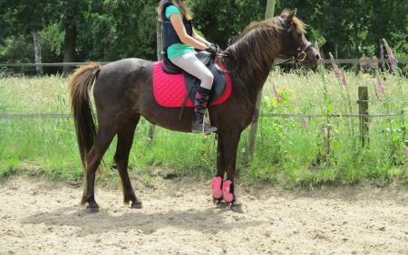 Spiksplinternieuw Talentvolle welsh pony te koop | Bokt.nl UF-85