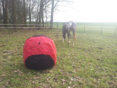paardenbal te koop