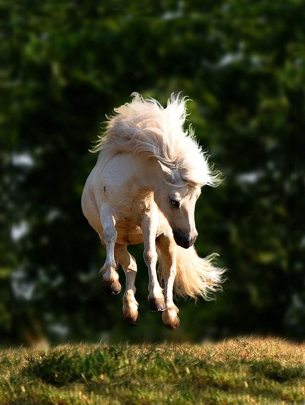 afbeeldingen beroemde paarden