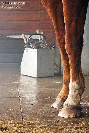 paard dikker krijgen