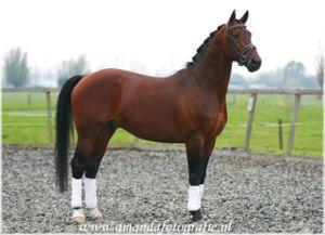 wat is een kwpn paard