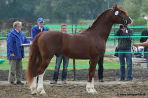 Frederiksborger - Paarden-encyclopedie | 300 x 200 jpeg 18kB