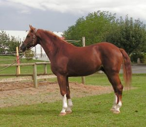 Westfalerstand.jpg