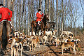 Foxhunting Master of Hounds.jpg